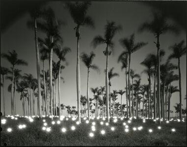 Tokihiro Sato, '#356 Palm', 1997
