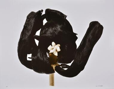 Denis Brihat, 'Tulipe Noire', 1977 printed 2001