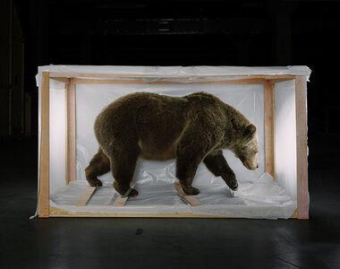 Richard Barnes, 'Smithsonian Bear From Animal Logic', 2005
