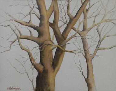Susan Wellington, 'Tree Patterns', 2019