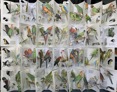 Jack Milroy, 'The Librarian's Parrots', 2019