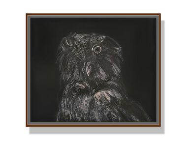 Sun Yanchu, 'The Owl', 2019