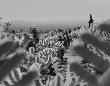 Arno Rafael Minkkinen, 'Joshua Tree, California', 2011