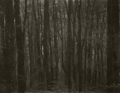 Takeshi Shikama, 'Silent Respiration of Forests - Japan: Nakayamatoge #22', 2011
