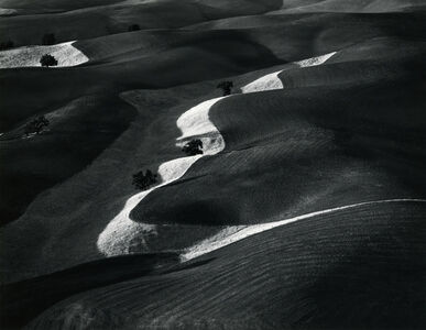 William Garnett, 'Eight Trees on a Hill, Paso Robles, CA', 1961