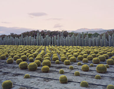 Virginia Beahan, 'Cactus Nursery, Seley Ranch, Borrego Springs, CA', 2013