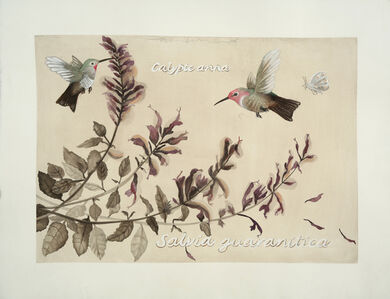 Adrienne Sherman, 'Hummingbirds and Salvia: Lafayette Park ', 2019