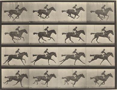 Eadweard Muybridge, 'Animal Locomotion, Plate 626', 1887