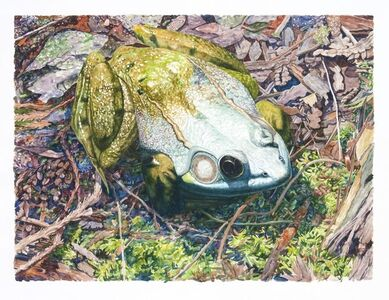 Tim Fortune, 'Green Frog', 2004