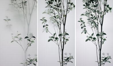 Still Life 008 - Pearlbush