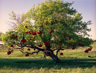 Amalie Atkins, 'Apples on Tree', 2009