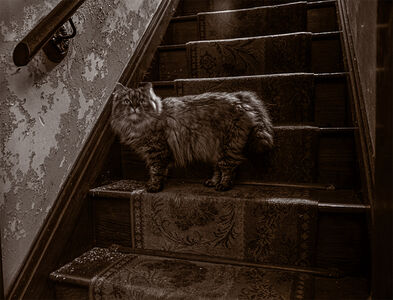 Gary Beeber, 'Kitty on the Staircase', 2020