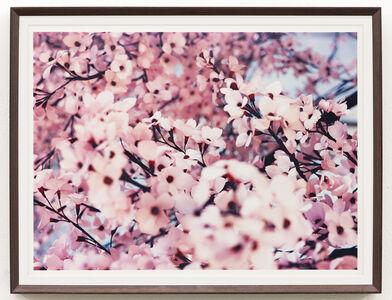 Thomas Demand, 'Blossom IV', 2015