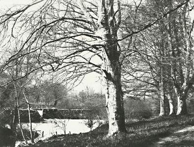 Francis Edmond Currey, 'Birch Trees, Ballyin Road Hatch', 1880s
