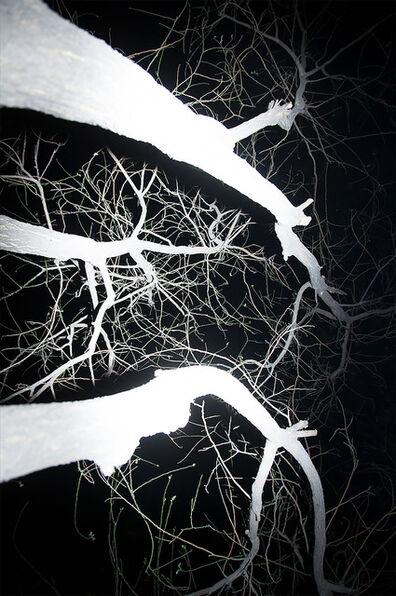 Fan Xi, 'Tree(detail) No.1', 2014
