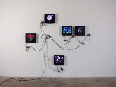 Matthew McCaslin, 'Wallflower', 2008
