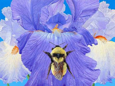 Rick Pas, 'Iris with Bumble Bee', 2017