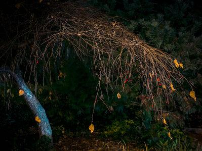 Anna Beeke, 'Midnight in the Garden #59', 2015