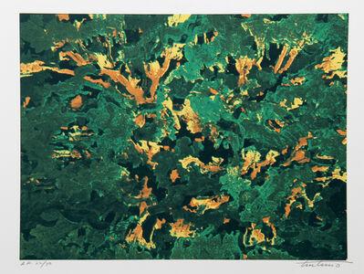 Domenick Turturro, 'Wind White Leaves', ca. 1980