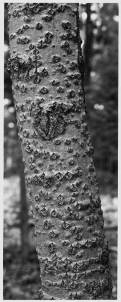 Thaddeus Holownia, 'Tree VII', 2001-2004