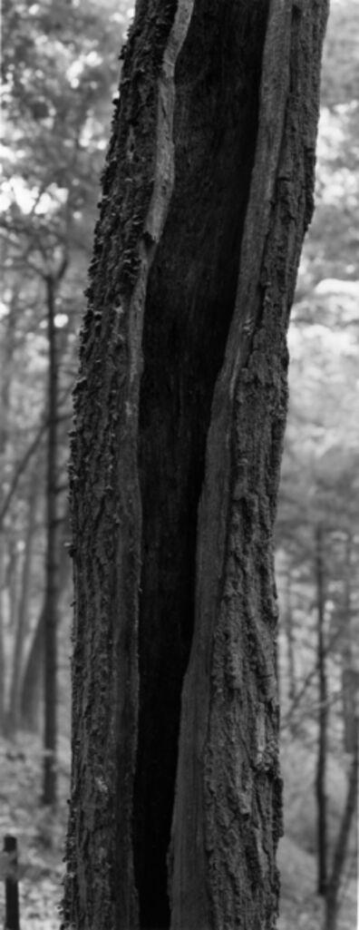 Thaddeus Holownia, 'Tree XI', 2001-2004
