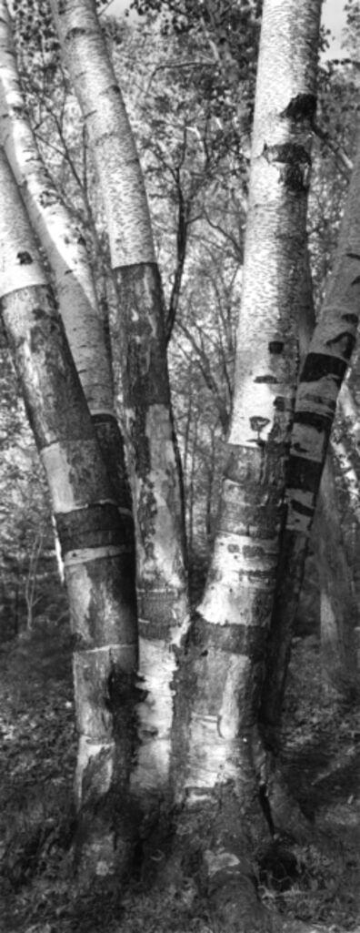 Thaddeus Holownia, 'Tree XXV', 2001-2004