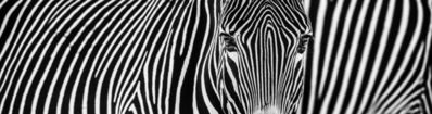 David Yarrow, 'Parallel Lines ', 2018