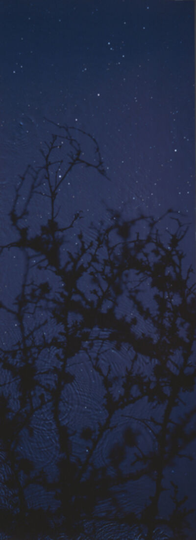Susan Derges, 'Star Field – Blackthorn', 2003