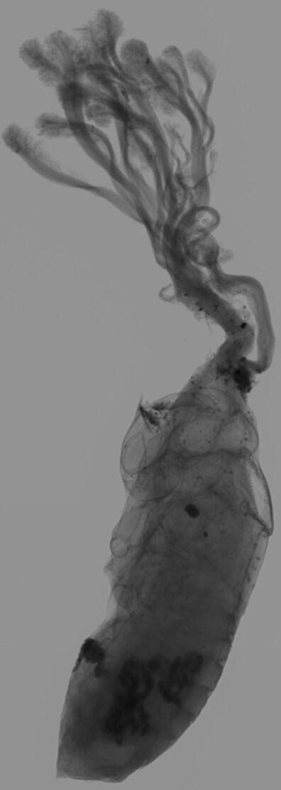 Goldin+Senneby, 'Insurgency of Life (X-ray)', 2019