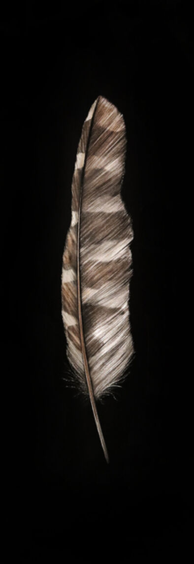 Mitchell Lonas, 'Feather', 2021