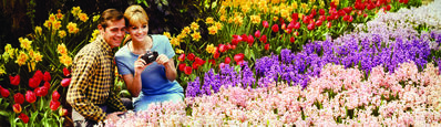 Donald Marvin, 'Colorama 302, Couple in blossoms at Bronx Botanical Gardens', Displayed 2/19/68–3/11/68