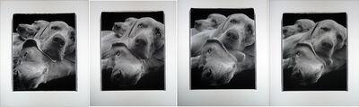 William Wegman, 'Chain (suite of four panels)', 1998