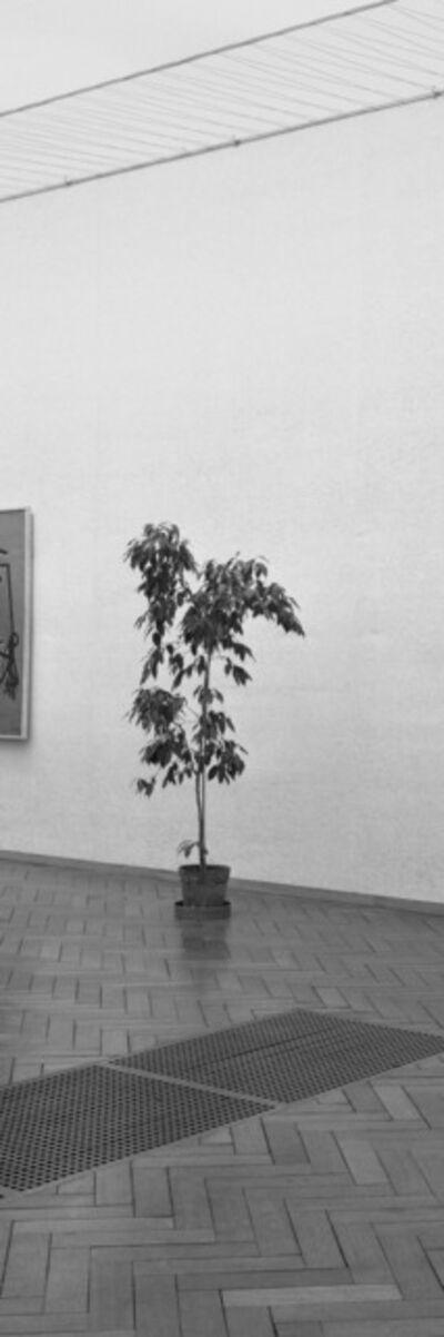 Inge Meijer, 'The Plant Collection III', 1963 / 2019