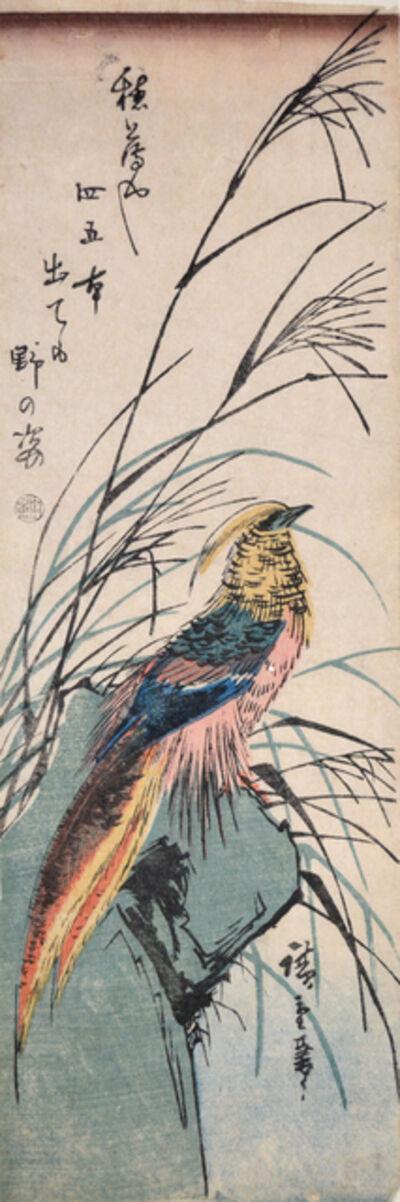 Utagawa Hiroshige (Andō Hiroshige), 'Pheasant in Late Summer ', ca. 1840