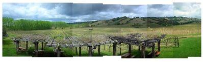 Les Boschke, 'Navarro Vineyards, Philo, California', 2008