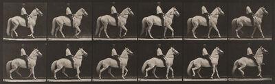 """Eadweard Muybridge, 'Plate 577, Animal Locomotion: """"Clinton"""" walking, mounted, irregular', 1872-1885 / printed 1887"""