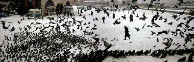 Nuri Bilge Ceylan, 'Pigeons in Winter', 2004