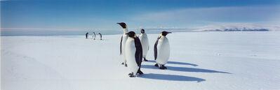 Stuart Klipper, 'Emperor Penguins  Ross Sea ', 1999