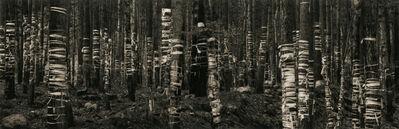 Pentti Sammallahti, 'Khamar-Daban, Buryatia', 1991