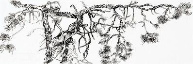 Elisabeth Condon, 'Pinon Pine Study, Evening', 2013