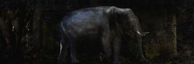Toru Tanno, 'Subterranean †elephant', 2014