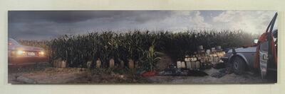 Anthony Goicolea, 'Cornfield', 2002