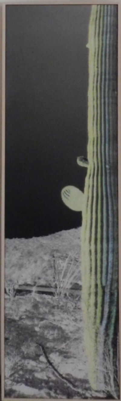 Bob Wade, 'Night Cactus', 2017