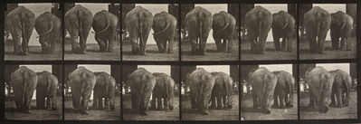 Eadweard Muybridge, 'Animal Locomotion: Plate 735 (Two Elephants Walking)', 1887