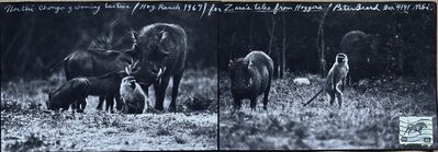 Peter Beard, 'Northi Chongo Grooming Tactics, for Zara's Tales. Hog Ranch', 1967