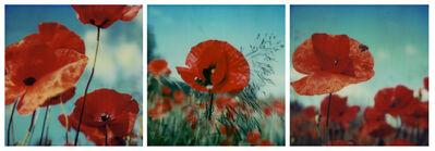 Carmen de Vos, 'Poppy Realm #ROW', 2006