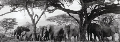 Peter Beard, 'Gardeners of Eden (Elephants and Baboons under Kilimanjaro)', 1984-printed 2014
