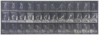 Eadweard Muybridge, 'Plate 387. Movements, male, farmer, using a long-handled shovel.', 1887