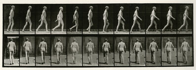 Eadweard Muybridge, 'Animal Locomotion #562', 1887