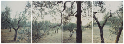 Joann Verburg, 'Olive Trees After the Heat', 1998